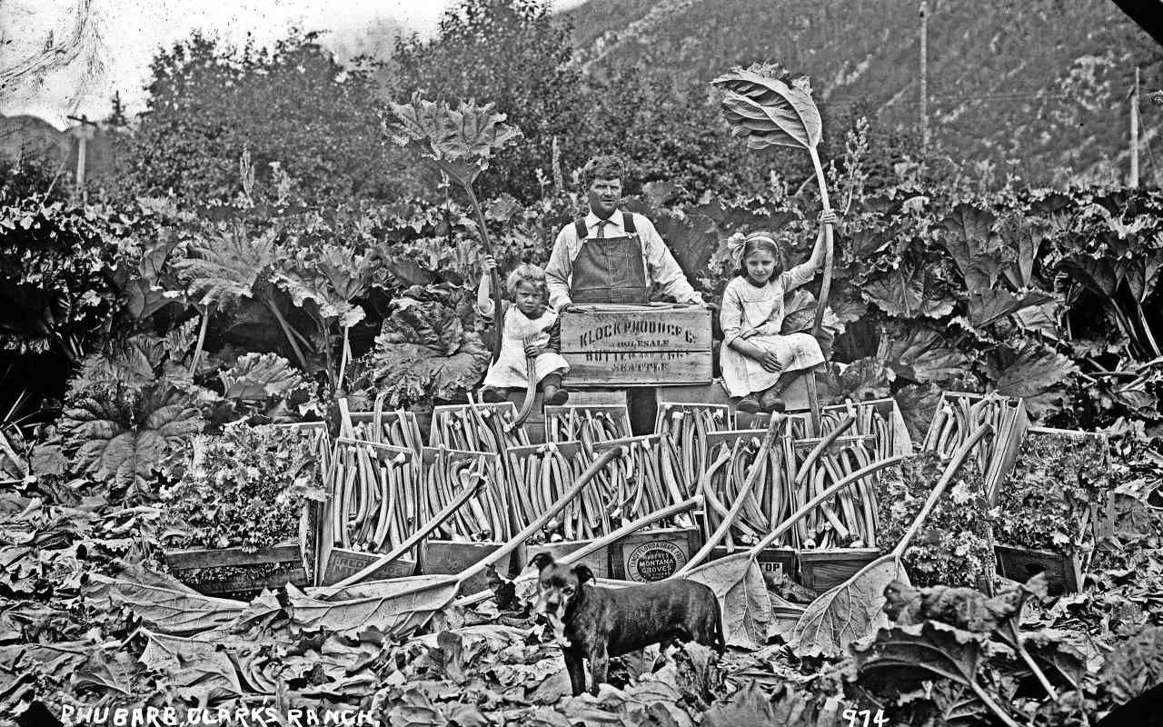 Photo courtesy of the Klondike Gold Rush National Historic Park Here is Henry with his two daughters preparing to ship rhubarb in wooden crates. Approximately 1912.